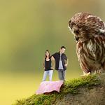 Owl 0059